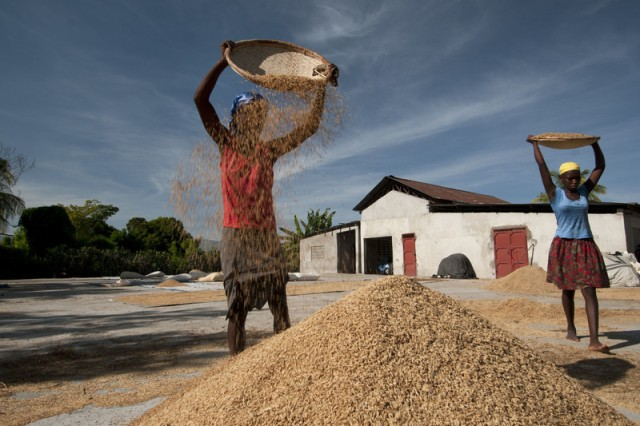 Agricultura de subsistencia. Esta es una instalación de cultivo, secado y almacenamiento de arroz en Petite Riviere de RACPABA. Oxfam trabaja con cooperativas de cultivadores de arroz en el valle del río Artibonite para ayudarles a mejorar su producción y ganar más por su cosecha (Oxfam).